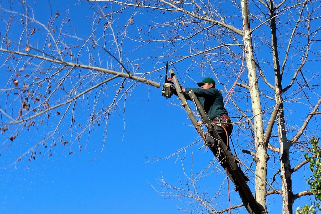 Contact Us-Apollo Beach FL Tree Trimming and Stump Grinding Services-We Offer Tree Trimming Services, Tree Removal, Tree Pruning, Tree Cutting, Residential and Commercial Tree Trimming Services, Storm Damage, Emergency Tree Removal, Land Clearing, Tree Companies, Tree Care Service, Stump Grinding, and we're the Best Tree Trimming Company Near You Guaranteed!