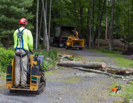 Emergency Tree Removal-Apollo Beach FL Tree Trimming and Stump Grinding Services-We Offer Tree Trimming Services, Tree Removal, Tree Pruning, Tree Cutting, Residential and Commercial Tree Trimming Services, Storm Damage, Emergency Tree Removal, Land Clearing, Tree Companies, Tree Care Service, Stump Grinding, and we're the Best Tree Trimming Company Near You Guaranteed!