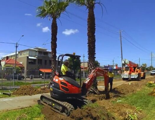 Palm Tree Removal-Apollo Beach FL Tree Trimming and Stump Grinding Services-We Offer Tree Trimming Services, Tree Removal, Tree Pruning, Tree Cutting, Residential and Commercial Tree Trimming Services, Storm Damage, Emergency Tree Removal, Land Clearing, Tree Companies, Tree Care Service, Stump Grinding, and we're the Best Tree Trimming Company Near You Guaranteed!