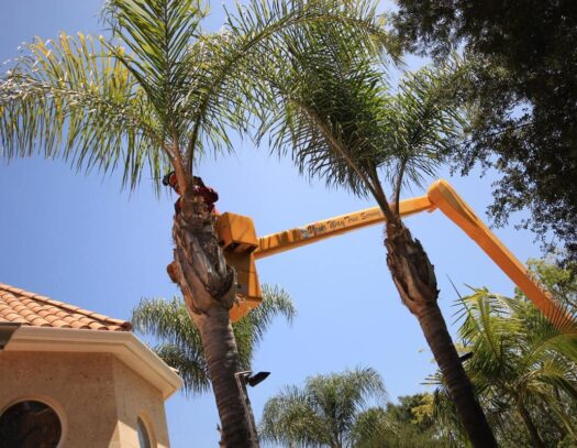 Palm Tree Trimming-Apollo Beach FL Tree Trimming and Stump Grinding Services-We Offer Tree Trimming Services, Tree Removal, Tree Pruning, Tree Cutting, Residential and Commercial Tree Trimming Services, Storm Damage, Emergency Tree Removal, Land Clearing, Tree Companies, Tree Care Service, Stump Grinding, and we're the Best Tree Trimming Company Near You Guaranteed!
