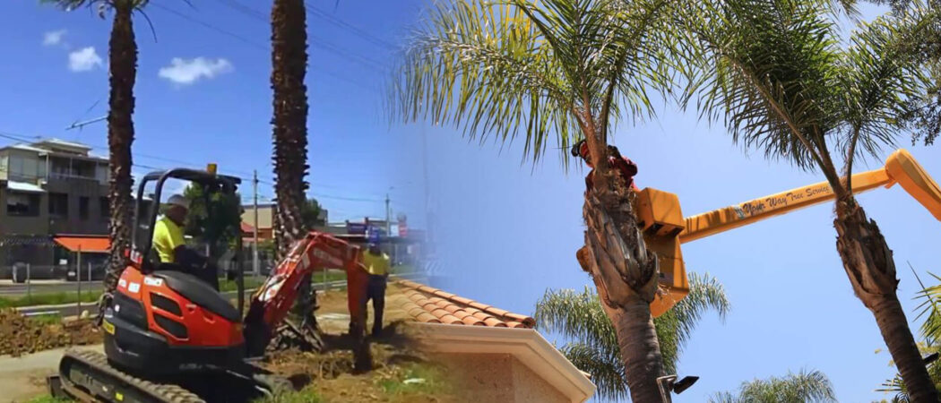 Palm tree trimming & palm tree removal-Apollo Beach FL Tree Trimming and Stump Grinding Services-We Offer Tree Trimming Services, Tree Removal, Tree Pruning, Tree Cutting, Residential and Commercial Tree Trimming Services, Storm Damage, Emergency Tree Removal, Land Clearing, Tree Companies, Tree Care Service, Stump Grinding, and we're the Best Tree Trimming Company Near You Guaranteed!