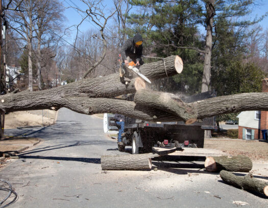 Residential Tree Services-Apollo Beach FL Tree Trimming and Stump Grinding Services-We Offer Tree Trimming Services, Tree Removal, Tree Pruning, Tree Cutting, Residential and Commercial Tree Trimming Services, Storm Damage, Emergency Tree Removal, Land Clearing, Tree Companies, Tree Care Service, Stump Grinding, and we're the Best Tree Trimming Company Near You Guaranteed!