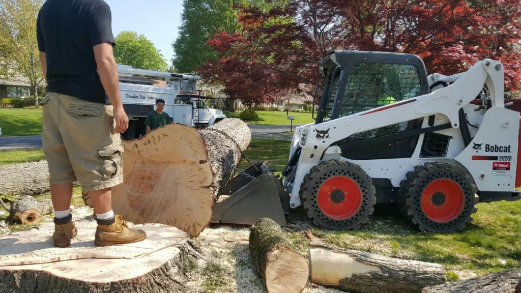 Services-Apollo Beach FL Tree Trimming and Stump Grinding Services-We Offer Tree Trimming Services, Tree Removal, Tree Pruning, Tree Cutting, Residential and Commercial Tree Trimming Services, Storm Damage, Emergency Tree Removal, Land Clearing, Tree Companies, Tree Care Service, Stump Grinding, and we're the Best Tree Trimming Company Near You Guaranteed!