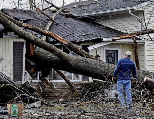 Storm Damage-Apollo Beach FL Tree Trimming and Stump Grinding Services-We Offer Tree Trimming Services, Tree Removal, Tree Pruning, Tree Cutting, Residential and Commercial Tree Trimming Services, Storm Damage, Emergency Tree Removal, Land Clearing, Tree Companies, Tree Care Service, Stump Grinding, and we're the Best Tree Trimming Company Near You Guaranteed!