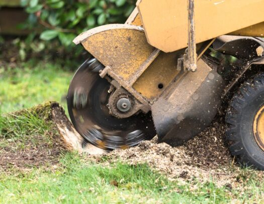 Stump Grinding-Apollo Beach FL Tree Trimming and Stump Grinding Services-We Offer Tree Trimming Services, Tree Removal, Tree Pruning, Tree Cutting, Residential and Commercial Tree Trimming Services, Storm Damage, Emergency Tree Removal, Land Clearing, Tree Companies, Tree Care Service, Stump Grinding, and we're the Best Tree Trimming Company Near You Guaranteed!