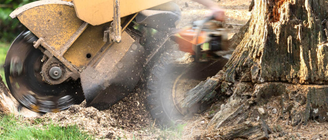 Stump grinding & removal-Apollo Beach FL Tree Trimming and Stump Grinding Services-We Offer Tree Trimming Services, Tree Removal, Tree Pruning, Tree Cutting, Residential and Commercial Tree Trimming Services, Storm Damage, Emergency Tree Removal, Land Clearing, Tree Companies, Tree Care Service, Stump Grinding, and we're the Best Tree Trimming Company Near You Guaranteed!