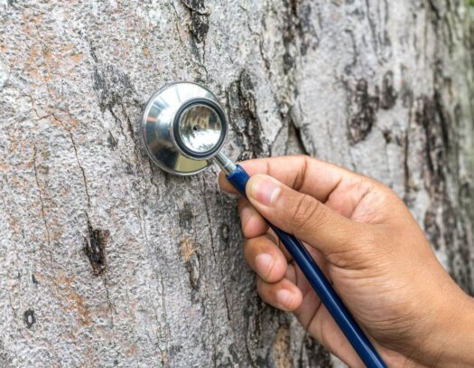 Tree Assessments-Apollo Beach FL Tree Trimming and Stump Grinding Services-We Offer Tree Trimming Services, Tree Removal, Tree Pruning, Tree Cutting, Residential and Commercial Tree Trimming Services, Storm Damage, Emergency Tree Removal, Land Clearing, Tree Companies, Tree Care Service, Stump Grinding, and we're the Best Tree Trimming Company Near You Guaranteed!
