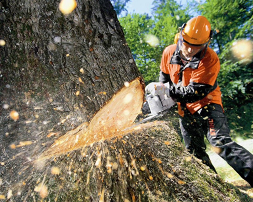Tree Cutting-Apollo Beach FL Tree Trimming and Stump Grinding Services-We Offer Tree Trimming Services, Tree Removal, Tree Pruning, Tree Cutting, Residential and Commercial Tree Trimming Services, Storm Damage, Emergency Tree Removal, Land Clearing, Tree Companies, Tree Care Service, Stump Grinding, and we're the Best Tree Trimming Company Near You Guaranteed!