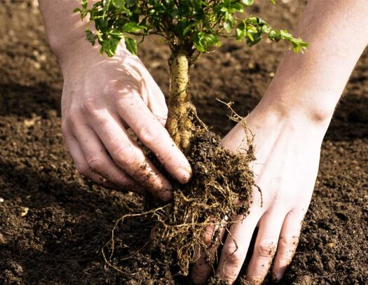Tree Planting-Apollo Beach FL Tree Trimming and Stump Grinding Services-We Offer Tree Trimming Services, Tree Removal, Tree Pruning, Tree Cutting, Residential and Commercial Tree Trimming Services, Storm Damage, Emergency Tree Removal, Land Clearing, Tree Companies, Tree Care Service, Stump Grinding, and we're the Best Tree Trimming Company Near You Guaranteed!