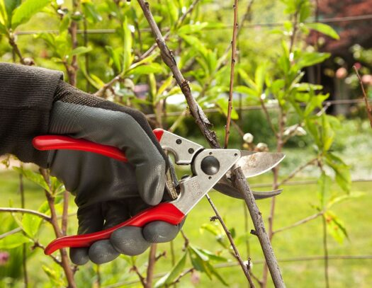 Tree Pruning-Apollo Beach FL Tree Trimming and Stump Grinding Services-We Offer Tree Trimming Services, Tree Removal, Tree Pruning, Tree Cutting, Residential and Commercial Tree Trimming Services, Storm Damage, Emergency Tree Removal, Land Clearing, Tree Companies, Tree Care Service, Stump Grinding, and we're the Best Tree Trimming Company Near You Guaranteed!