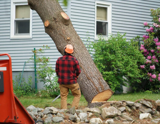 Tree Removal-Apollo Beach FL Tree Trimming and Stump Grinding Services-We Offer Tree Trimming Services, Tree Removal, Tree Pruning, Tree Cutting, Residential and Commercial Tree Trimming Services, Storm Damage, Emergency Tree Removal, Land Clearing, Tree Companies, Tree Care Service, Stump Grinding, and we're the Best Tree Trimming Company Near You Guaranteed!