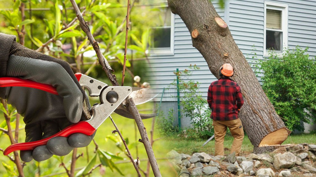 Tree pruning & tree removal-Apollo Beach FL Tree Trimming and Stump Grinding Services-We Offer Tree Trimming Services, Tree Removal, Tree Pruning, Tree Cutting, Residential and Commercial Tree Trimming Services, Storm Damage, Emergency Tree Removal, Land Clearing, Tree Companies, Tree Care Service, Stump Grinding, and we're the Best Tree Trimming Company Near You Guaranteed!